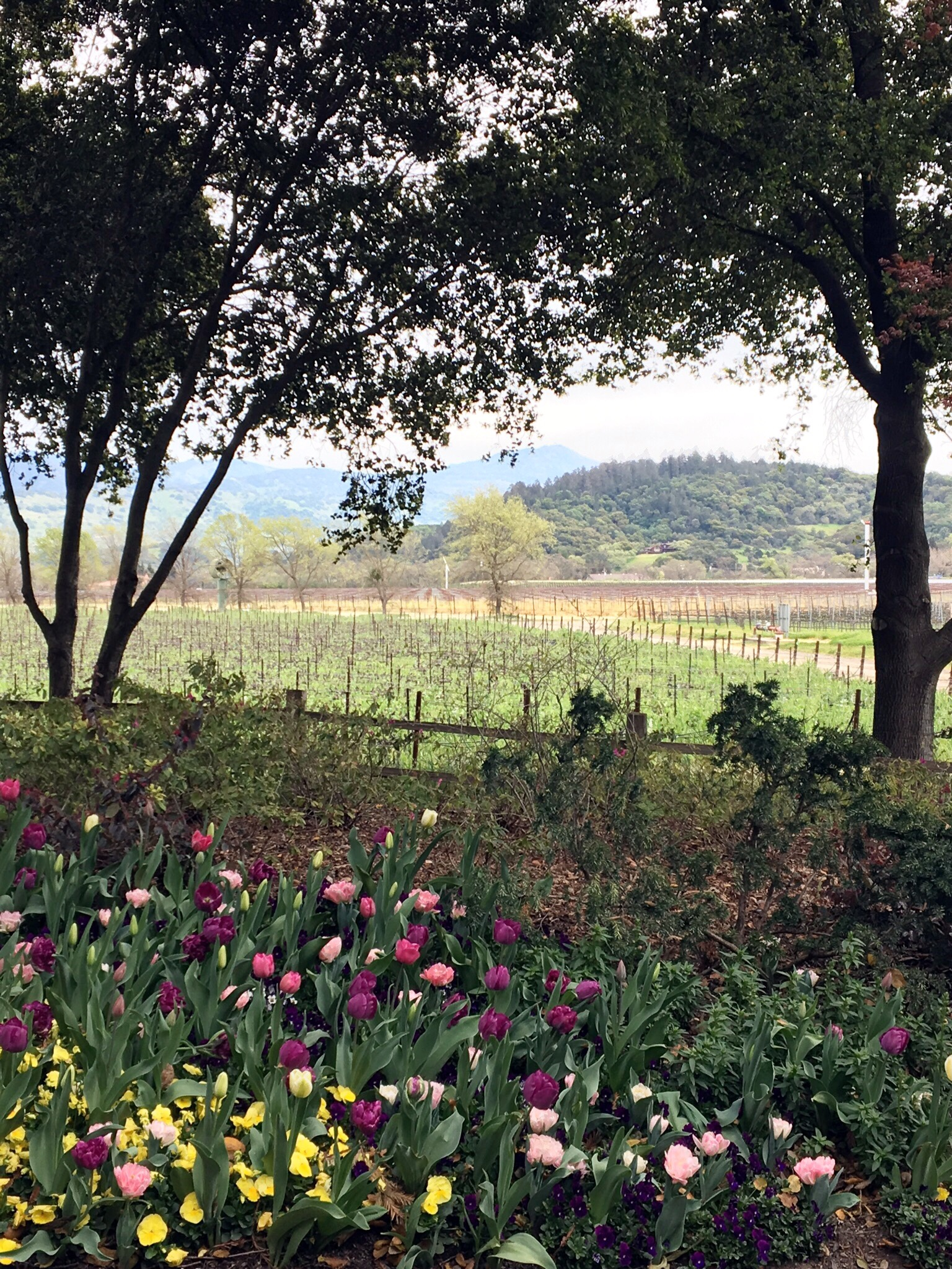 napa valley girlfriend getaway