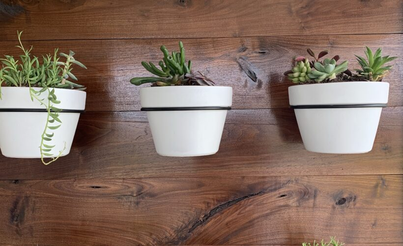 easy outdoor succulent wall