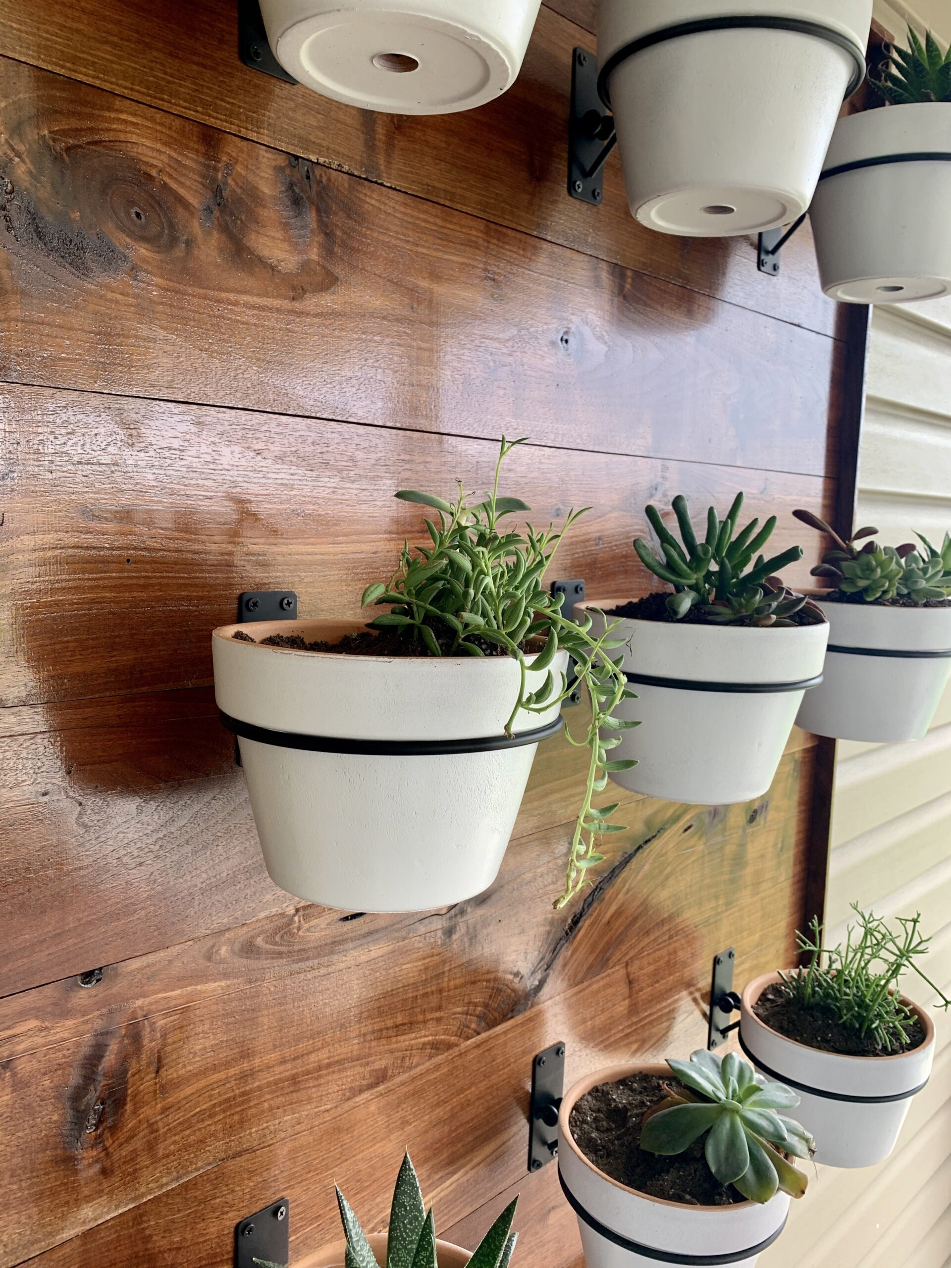 If you are looking for a fun do-it-yourself project, look no further than this easy outdoor succulent wall!